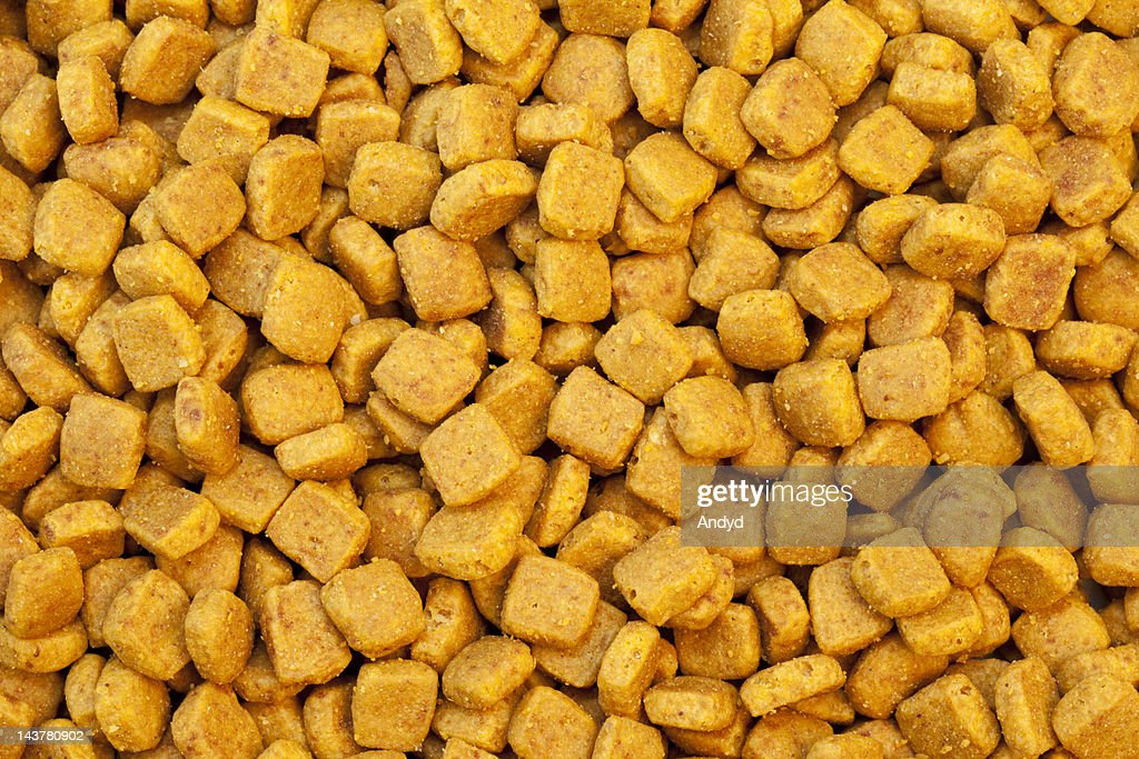 Cat Biscuits : Stock Photo