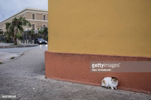 A cat braves the wind in Old San Juan as residents prepare for a direct hit from Hurricane Maria on September 19 2017 in San Juan Puerto Rico Puerto...