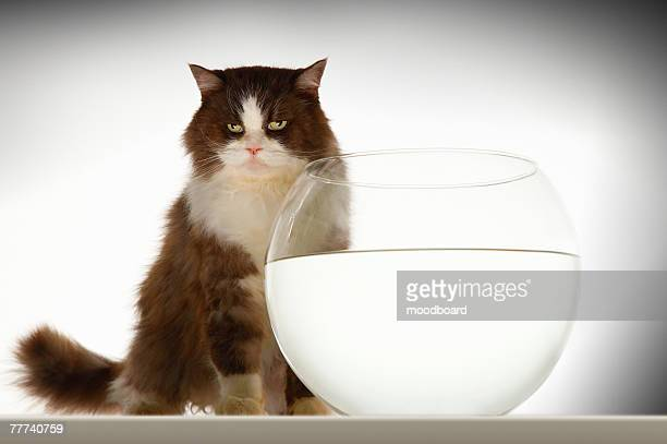 Cat by Empty Fishbowl