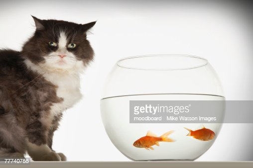 Cat by Fishbowl : Stock Photo