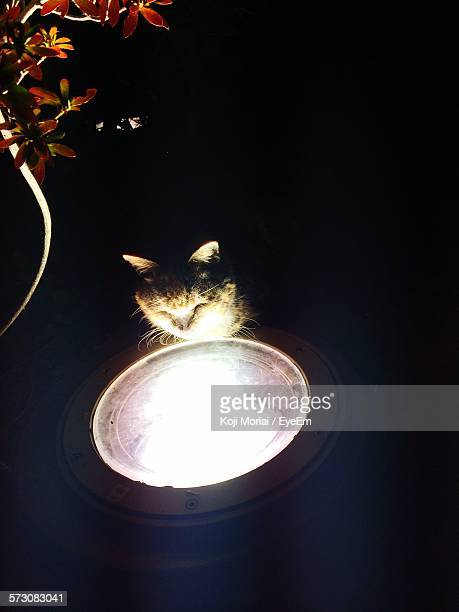 Cat By Recessed Light At Night