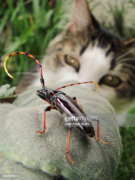 Cat checking a beetle
