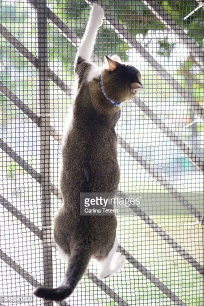 Cat climbing on a meshed window