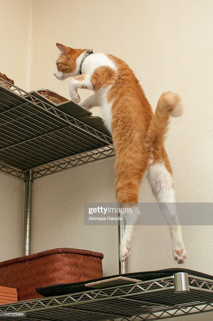 Cat climbing : Stock Photo
