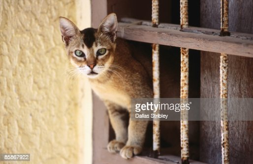 Cat climbing through window. : Stock Photo