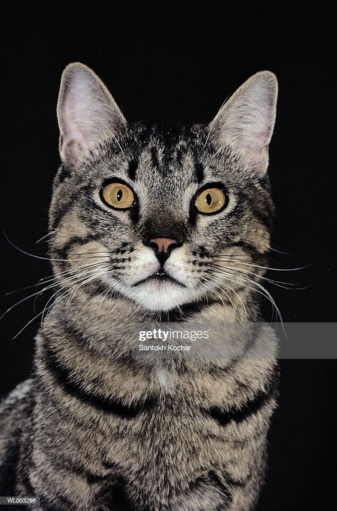 Cat Close-Up : Stock Photo