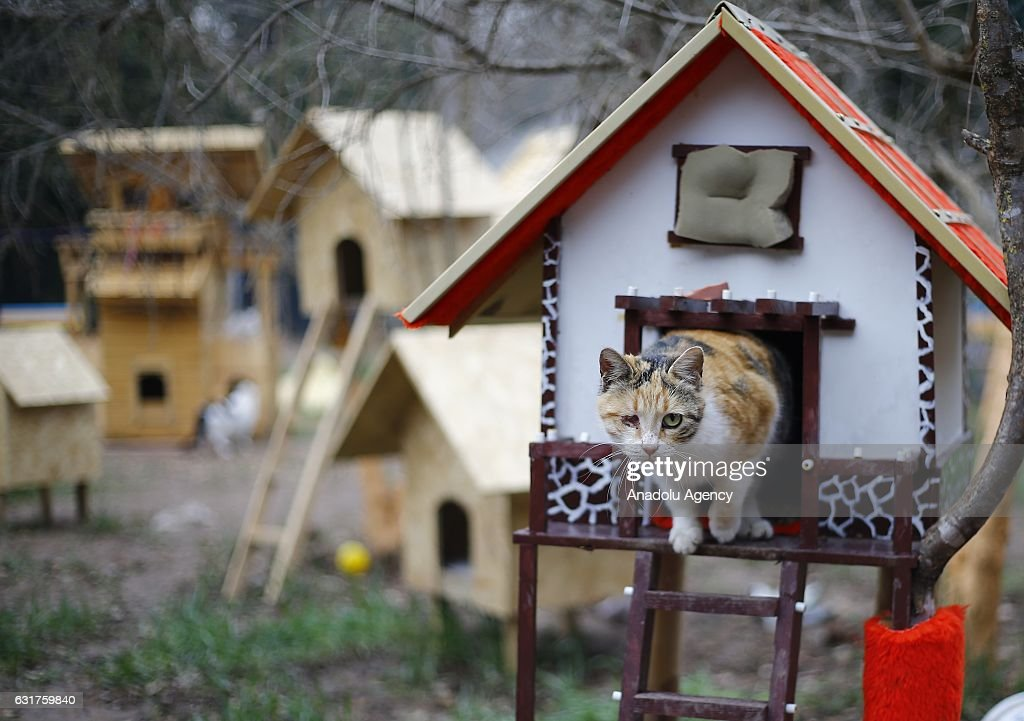 Cat Village in Turkey