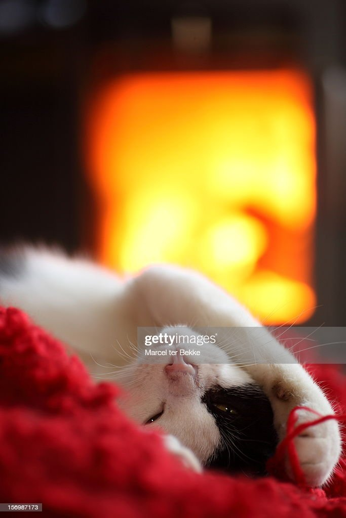 Cat comfort : Stock Photo