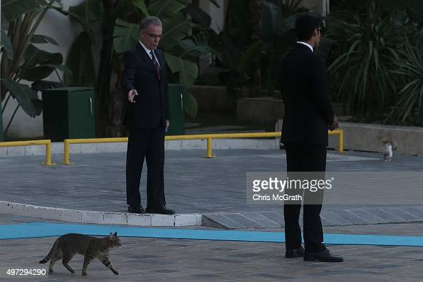 A cat crosses the blue entrance carpet in front of security guards during the official welcome ceremony on day one of the G20 Turkey Leaders Summit...