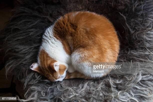 Cat curled up asleep