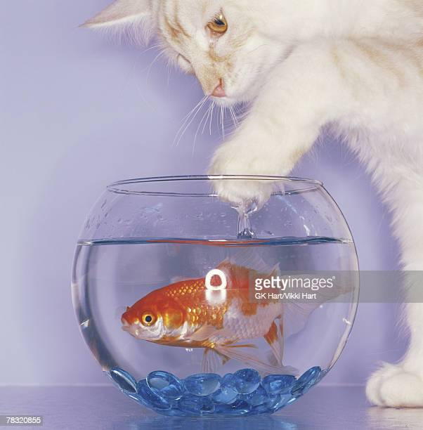 Immature pussy stock photos and pictures getty images for Fish in pussy