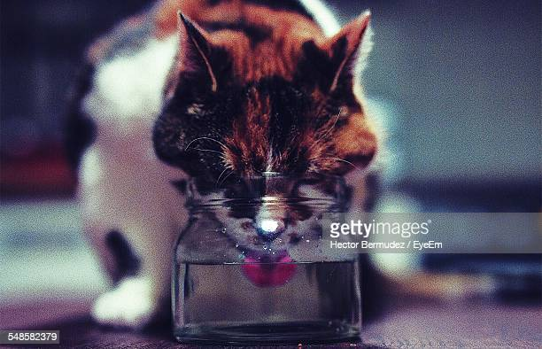 Cat Drinking Water From Jar