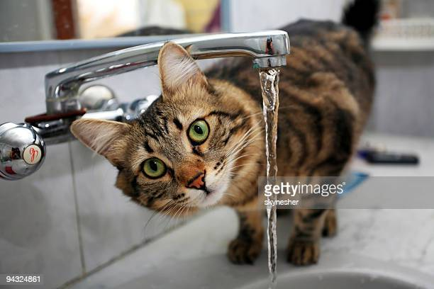 cat drinking water