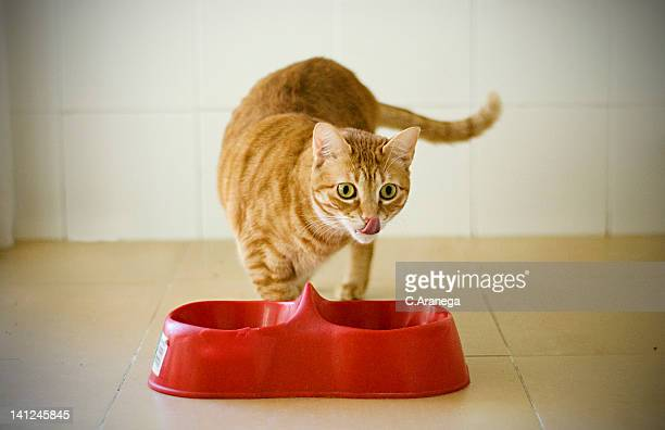 Cat eating delicious food