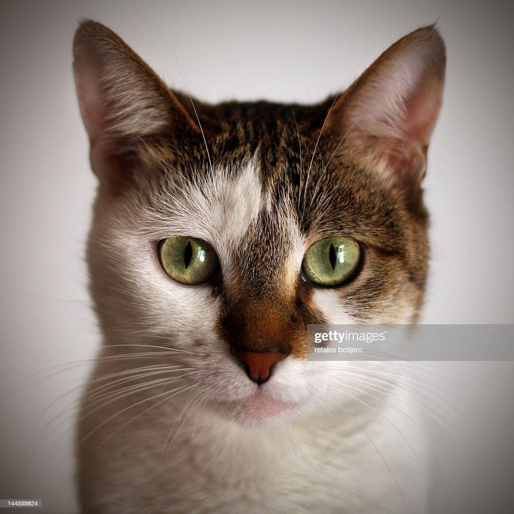 Cat eyes : Stock Photo