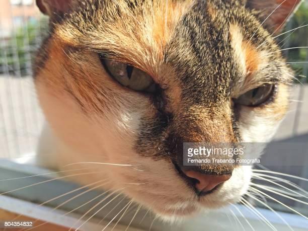 Cat face close-up sunbathing on the window