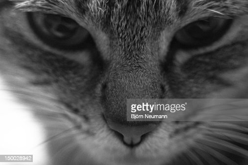 Cat face : Stock Photo