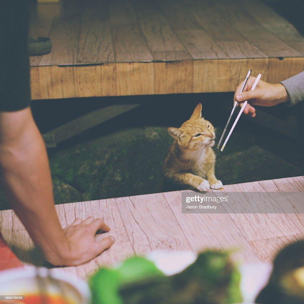Cat food : Stock Photo