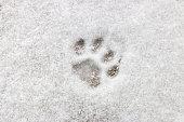 cat footprint on snow close-up