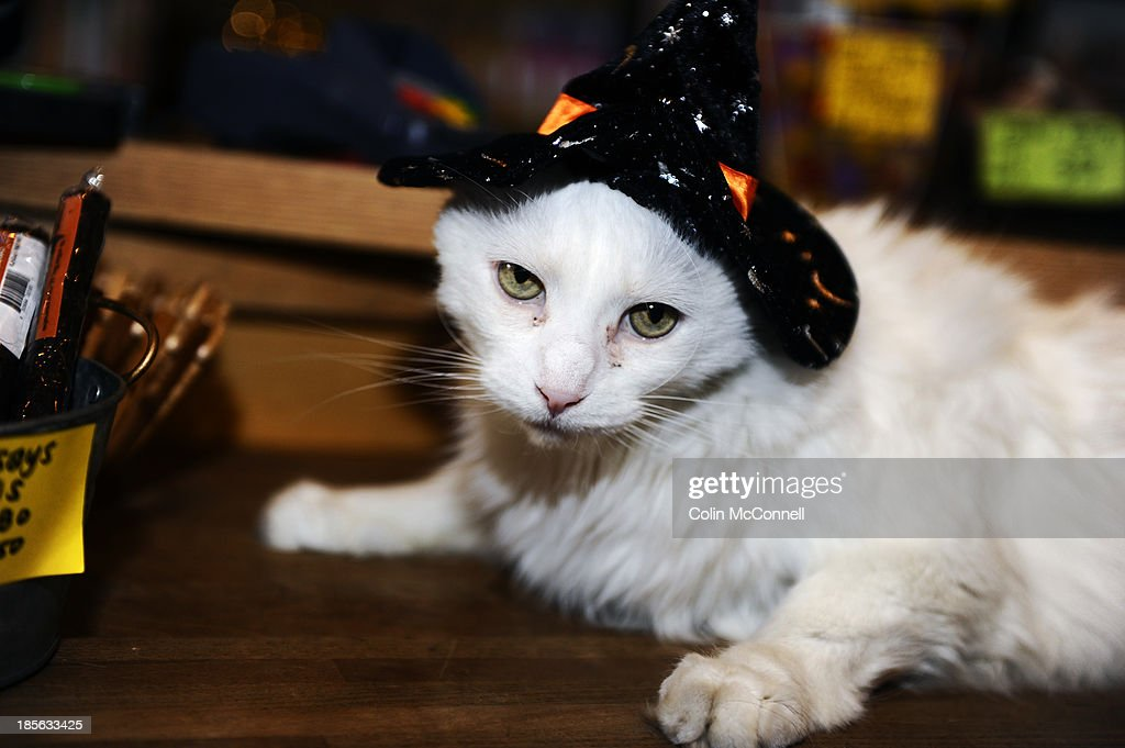A cat get dressed up for Halloween at The Small Wonders pet store on Danforth Avenue in Toronto. October 22, 2013.