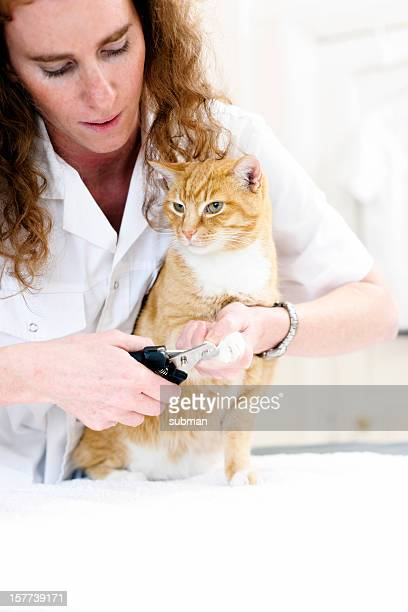 Cat getting nails trimmed by tech