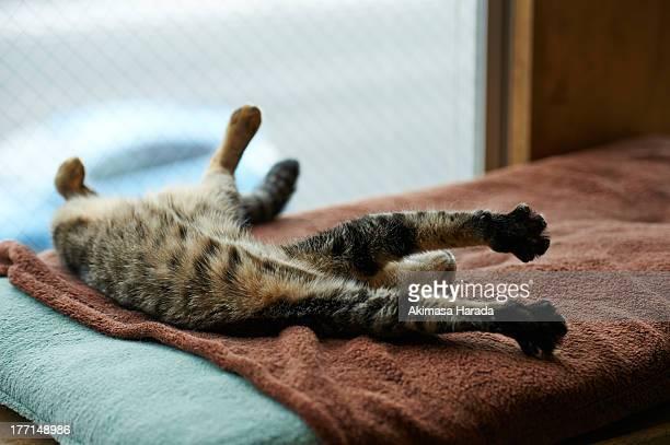 Cat has stretch