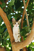 Cat having fun climbing a tree