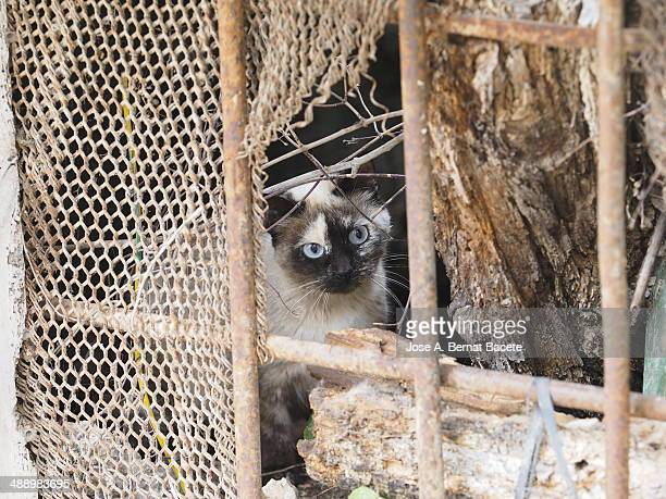 Cat hiding behind a fence with a wire pierced