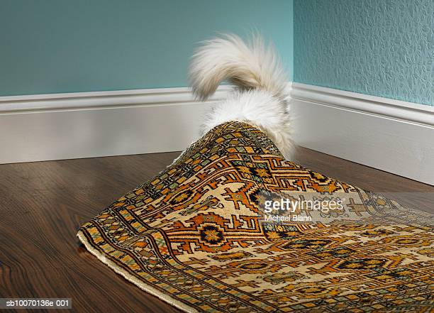 Cat hiding under carpet