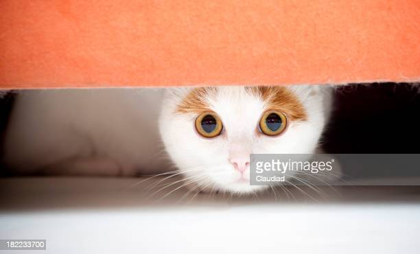 Cat hiding under sofa