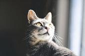 Cat Illuminated