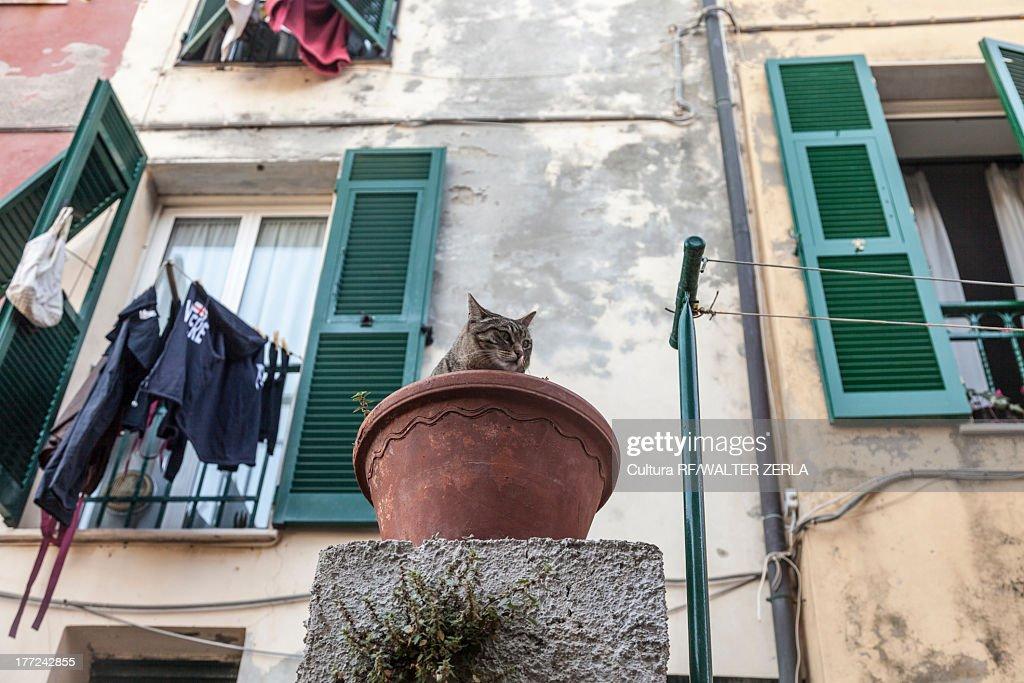 Cat in a flower pot, Porto Venere, Cinque Terre, Liguria, Italy
