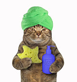 The cat with a green towel around his head is holding a shower sponge and a jar of shampoo. White background.