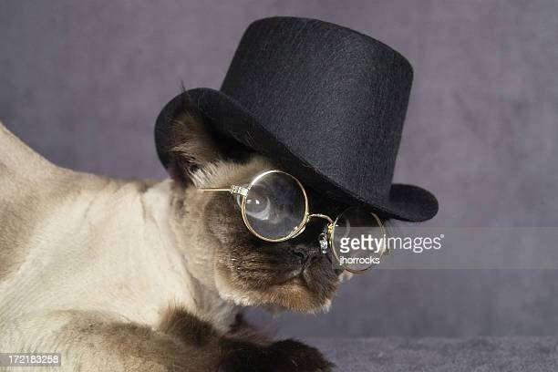 'Distinguished looking dark Himalayan, complete with top hat and glasses.'