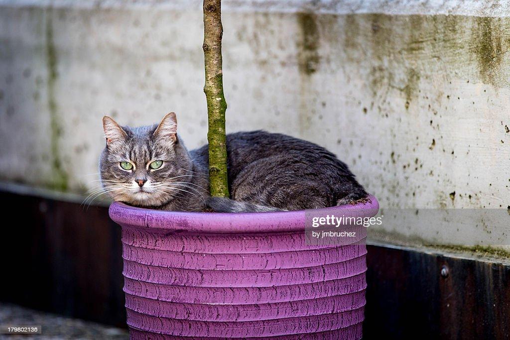 Cat in a pot : Stock Photo