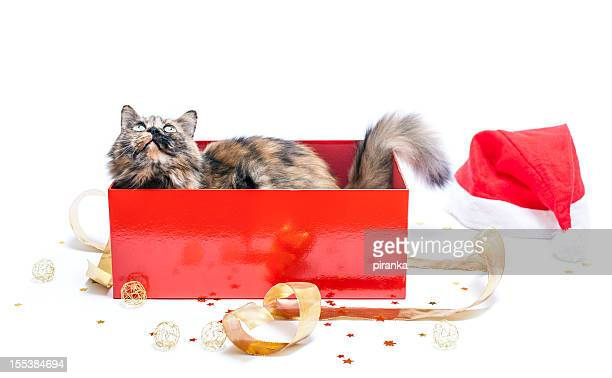 Cat in a red Christmas gift box on white background