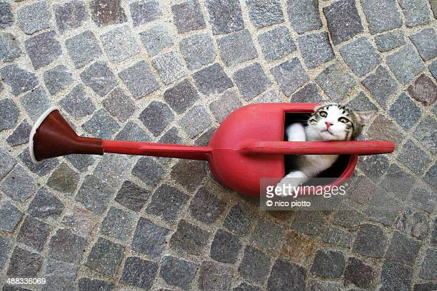 Cat in a red watering can