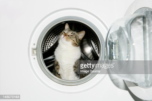 Cat in a washing machine : Stock Photo