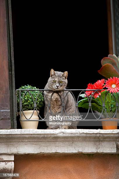 Cat in a Window Venice Italy