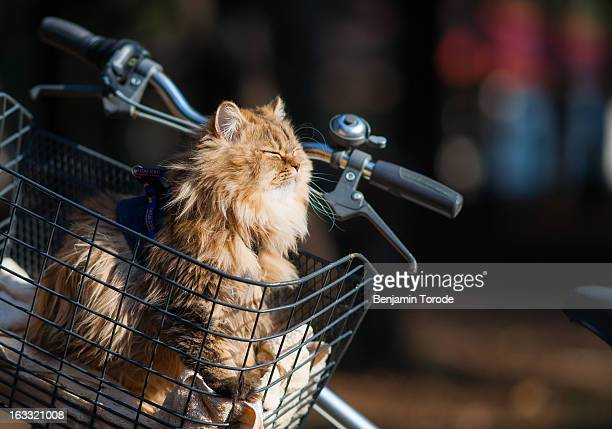 Cat in bicycle basket