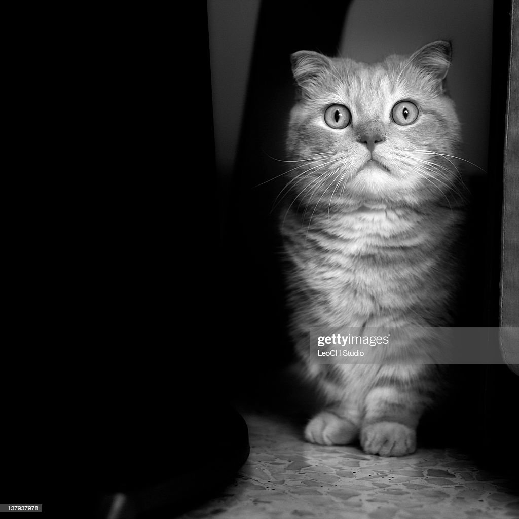 Cat in black and white : Stock Photo
