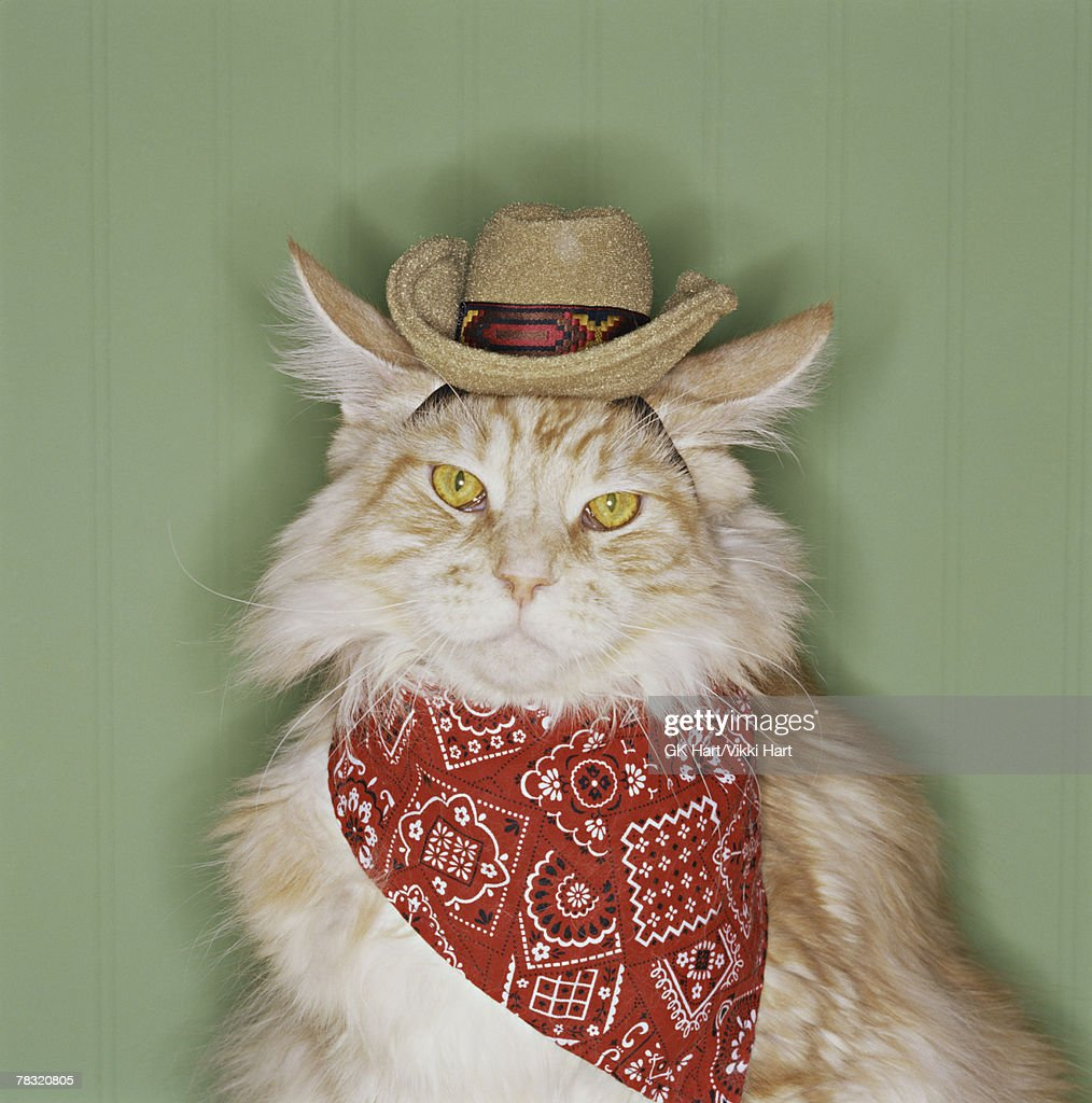 Cat in cowboy dress-up