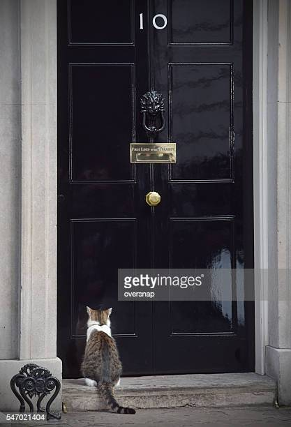 Cat in Downing street