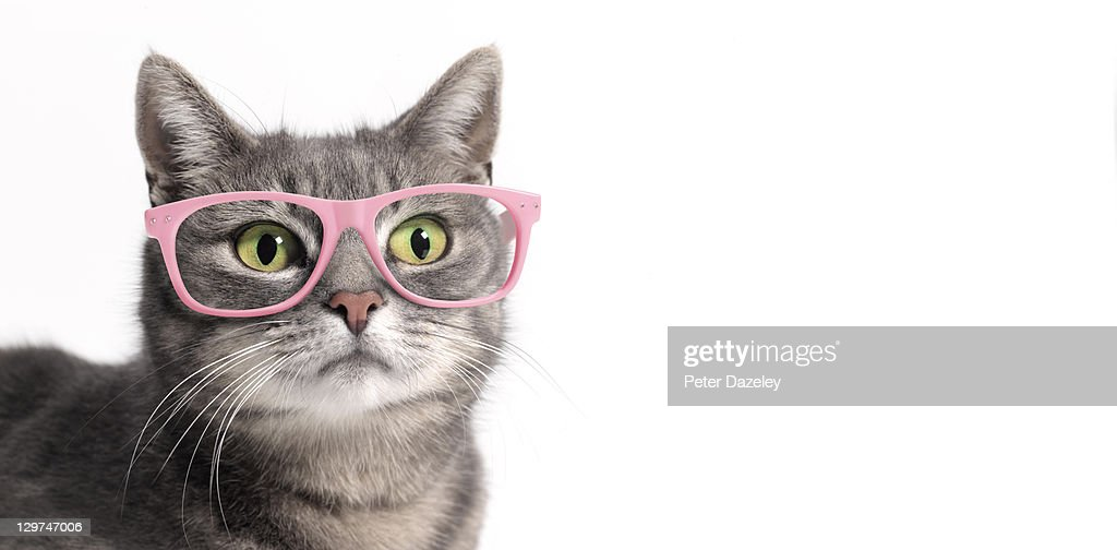 Cat in glasses : Stock Photo
