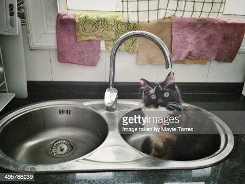 Cat in kitchen sink : Stock Photo