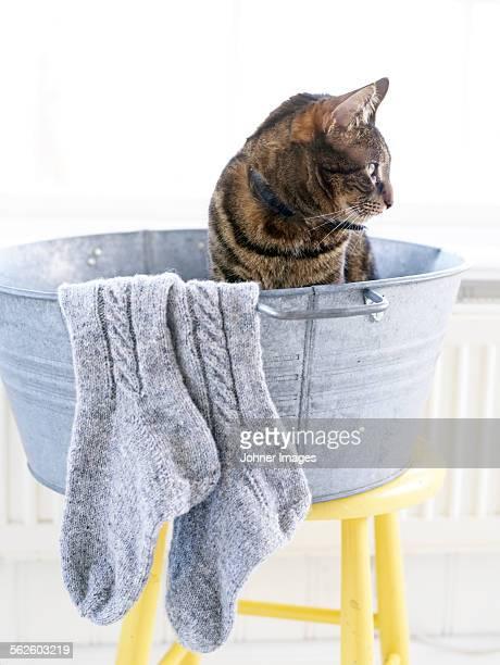 Cat in metal bath