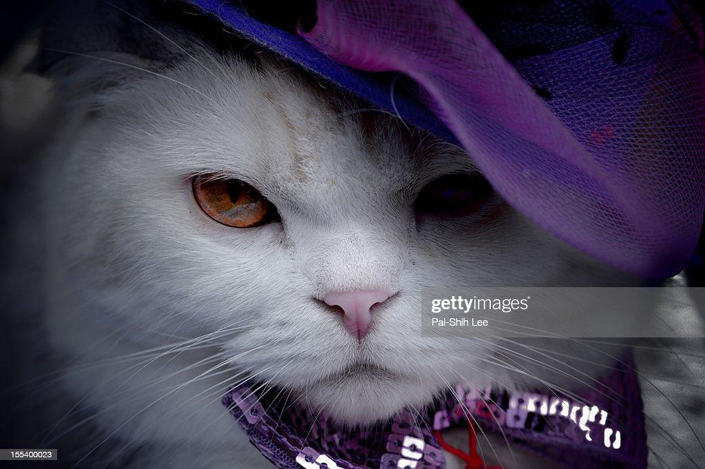 Cat in purple hat : Stock Photo
