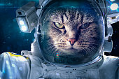 Cat in space takes a walk with a space suit
