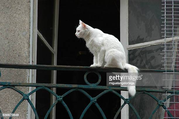 A cat in the balcony