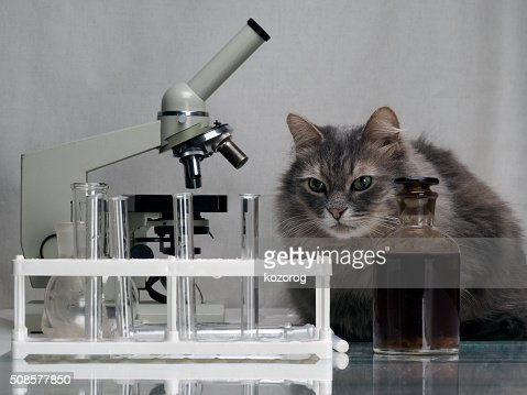 Cat in the chemical laboratory : Stockfoto